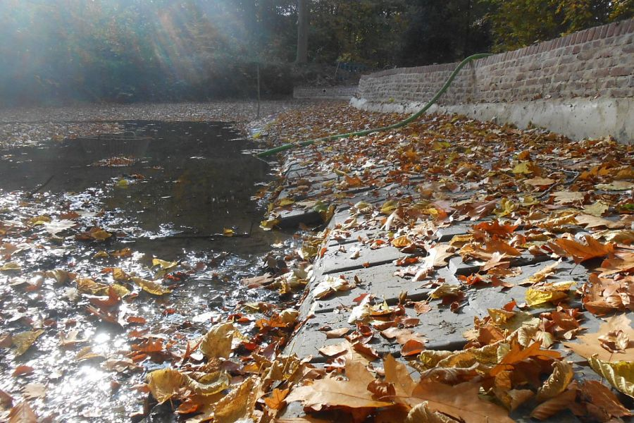 Pond banks Breivelde park
